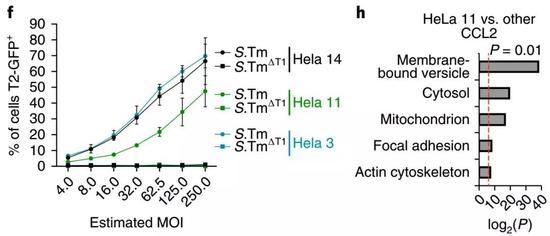 左图:不同细胞的感染复数 右图:不同细胞感染后蛋白表达的差异