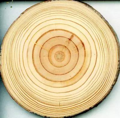 樹木的年輪。有趣的是,化石骨骼當中也有類似的結構。