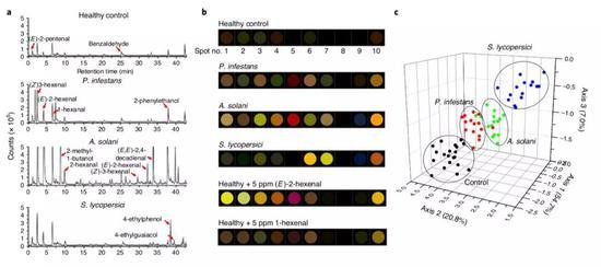 OC金納米傳感器能區分開症狀相似的三種常見番茄感染病。(圖片來源:Nature Plants)