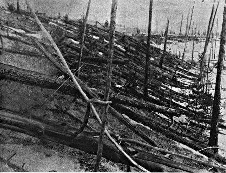 通古斯事件中倒塌的树木