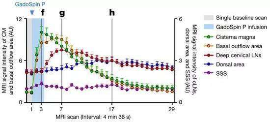 图3,往大鼠小脑延髓池中注射显影剂,用于MRI成像,来评估脑脊液大分子的分布以及在淋巴管中的引流路径(左)。下图显示了信号密度在大脑不同区域随着时间的变化:对于显影剂,发现其信号扩散很快,在到达颈静脉孔之前,信号峰值很快出现在基底外流(basaloutflow参考文献3