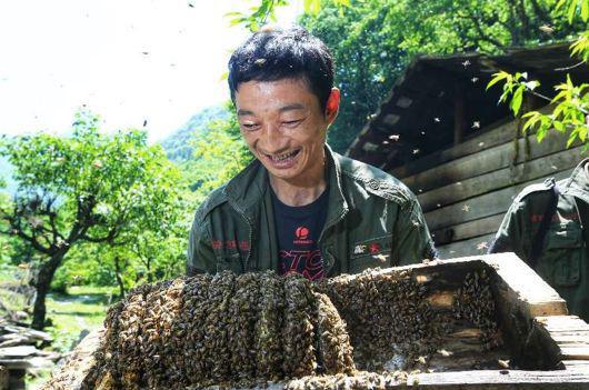 养蜂是关坝村的生态产业之一。来源:被访者供图