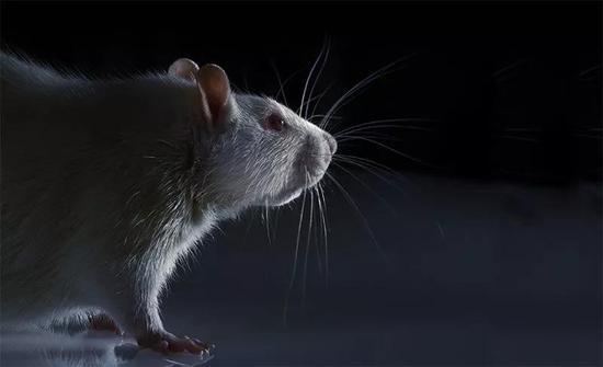 在某些情况下,计算机程序预测化学品毒性的准确性能与动物试验相媲美。来源:Coneyl Jay/SPL
