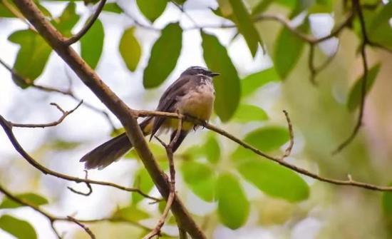 斑胸草雀(图源:unsplash)