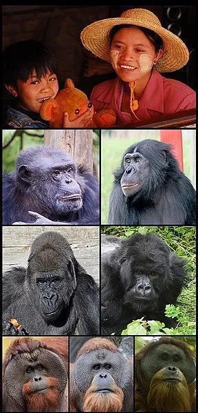 事实上,黑猩猩比我们曾想象过的要更接近于人类