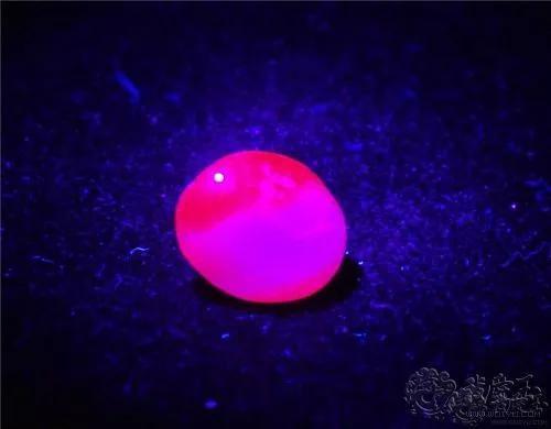 9-紫外線下紅寶石的熒光色(圖片來源:搜狐網)