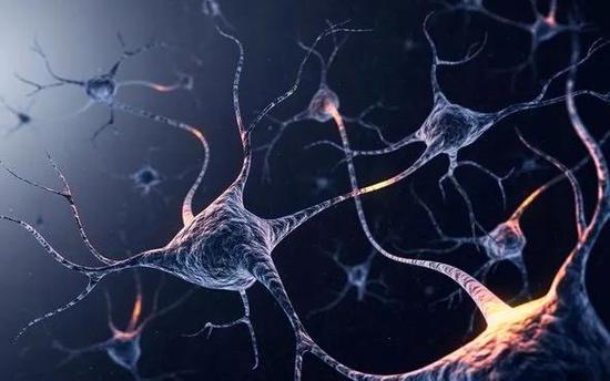 科学家实现海兔间记忆转移 将改写大脑记忆储存模式?