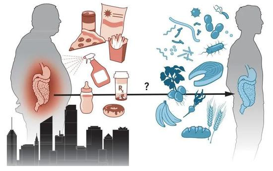 工業化對人體微生物的影響(圖片來源:KELLIE HOLOSKI/SCIENCE, 8)