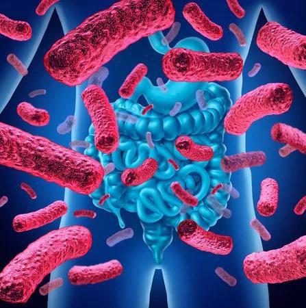 你或许想不到,肠道细菌还能影响下一代的大脑发育!