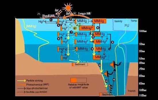 《【多彩联盟安卓版登录】人为汞污染已到达马里亚纳海沟?》