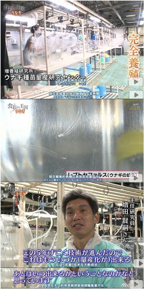 日本已经能在实验室里完全人工繁殖鳗鱼,并称未来有量产可能。来源:《食彩之国》