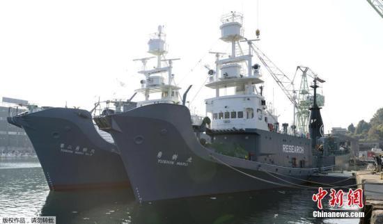 資料圖:當地時間2015年12月1日,日本下關港市,日本科研捕鯨船隊從山口縣下關港出發前往南極海域。
