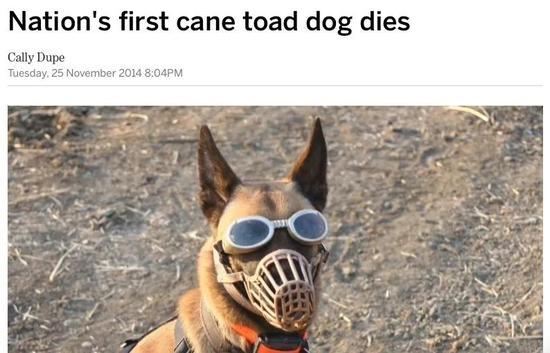 缉毒犬队改良了口罩和眼镜,稽查效率却大打折扣