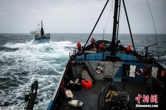 """资料图:2014年2月2日,南大洋,日本捕鲸船""""第二勇新丸""""(Yushin Maru)号企图对反捕鲸船""""史蒂夫·欧文""""(Steve Irwin)号进行驱离。"""
