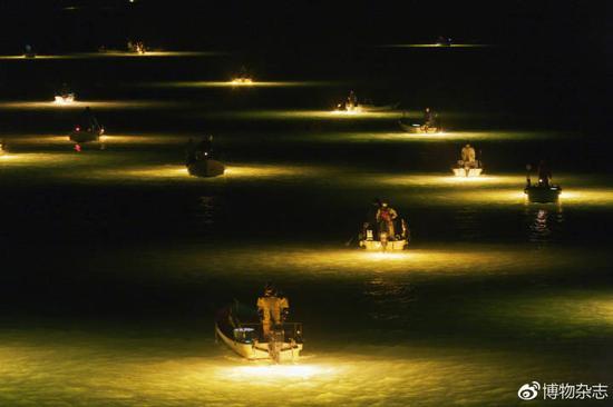 日本渔民夜里聚在吉野川,捕捞来到河口的鳗苗,再放在养殖场养大出售。
