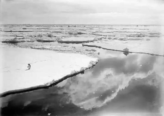 1910年12月28日,一只阿德利企鹅徘徊在南极罗斯属地(Ross Dependency)冰面上。图源:HERBERT PONTING/SCOTT POLAR RESEARCH INSTITUTE, UNIVERSITY OF CAMBRIDGE/GETTY IMAGES