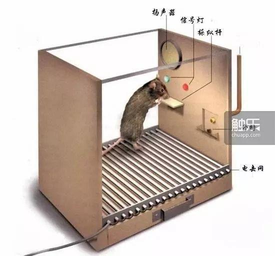 斯金纳箱实验装置图