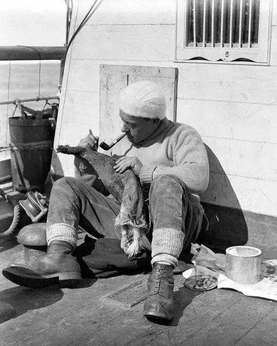 列维克正在新地探险(the Terra Nova Expedition)的船甲板上处理一只企鹅的皮。图源:HERBERT PONTING/SCOTT POLAR RESEARCH INSTITUTE, UNIVERSITY OF CAMBRIDGE/GETTY IMAGES