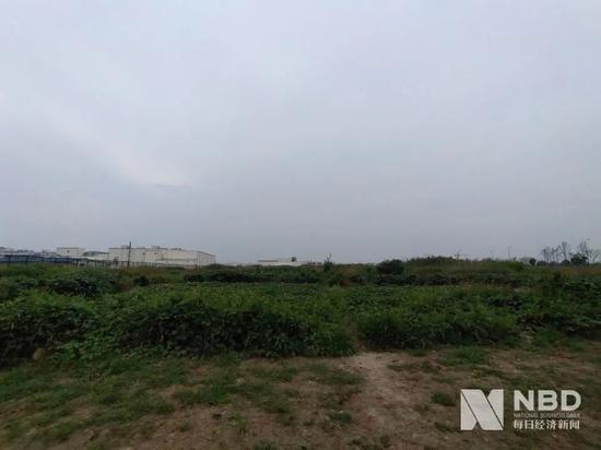Beyond Meat中国工厂拟建地所在未开发地块   图片来源:每经记者 张韵 摄