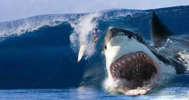 巨齿鲨百度云[BD1280P高清中字]资源下载
