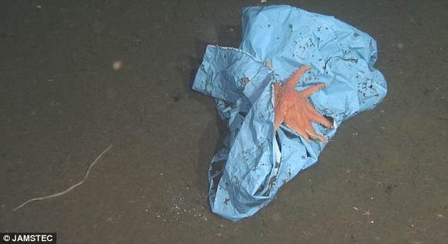 这只海星<a href=http://www.newskj.org/news/kjsh/ target=_blank class=infotextkey>生活</a>在457米深的海底,正在用一块蓝色防水布作为隐蔽场所。