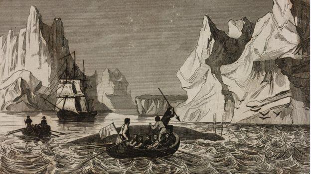 传统捕鲸法会给鲸鱼造成很大的痛苦。