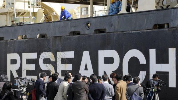 日本利用了一条允许为科研而捕鲸的条款,使捕鲸活动得以继续。
