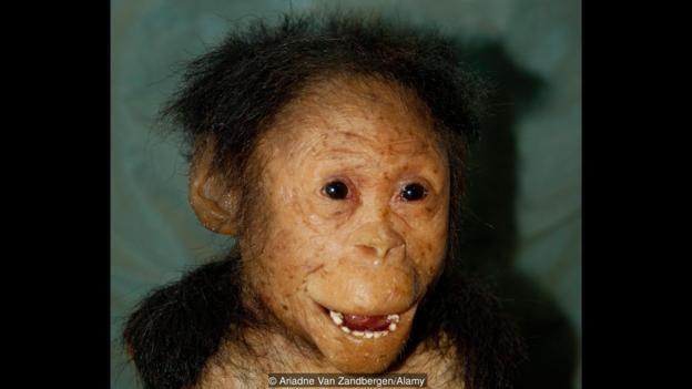"""始祖地猿""""阿尔迪""""的复原形象"""