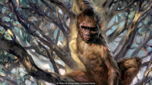 始祖地猿(Ardipithecus ramidus)的想象图