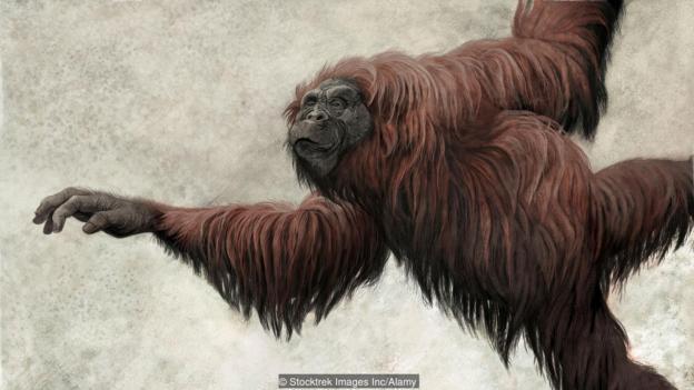 森林古猿的想象图