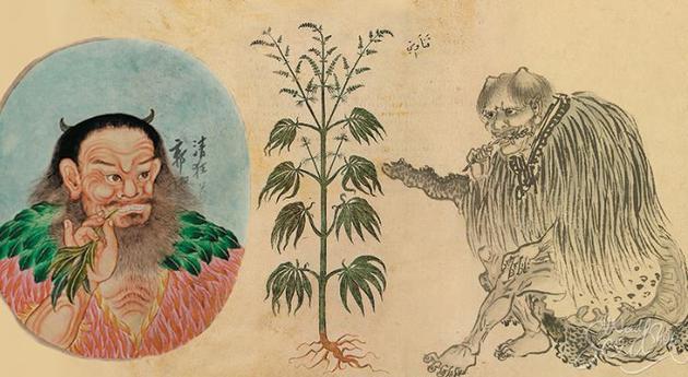 古人医用大麻