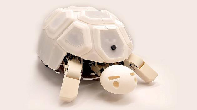 请善待这个机器人乌龟 不然它会缩回壳中不理你