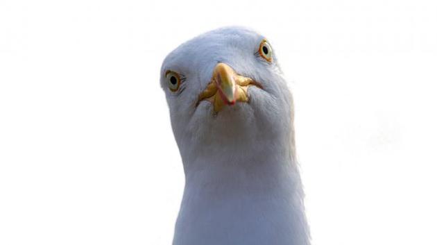 如何避免被海鸥夺食?用你的眼神赶走它!海鸥