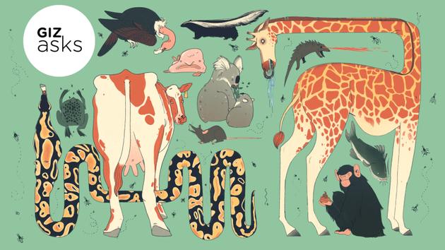 地球最脏生物:秃鹫在腿上撒尿起到杀菌作用