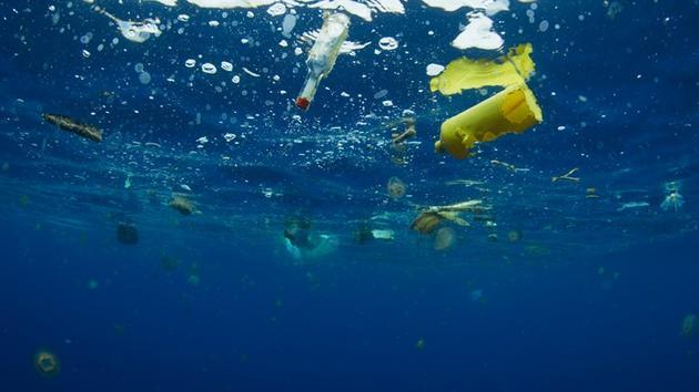 统计数据显示,至少180种海洋动物曾吞食过塑料,从微型浮游生物至巨大的鲸鱼。英国捕捞的三分之一鱼类的内脏中发现塑料,其中包括我们经常食用的鱼类,例如:人们喜爱吃的贻贝和龙虾等。