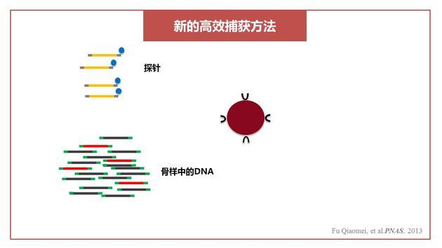 高效捕捉DNA