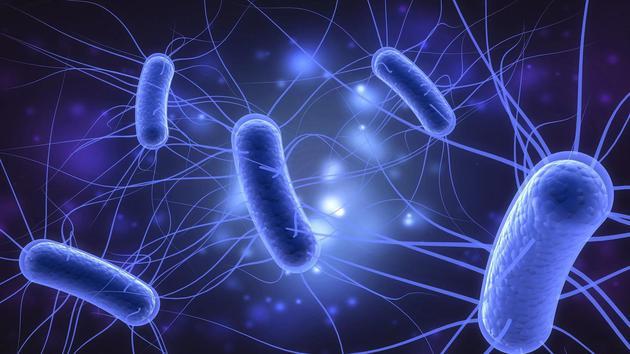 某些类型的大肠杆菌会保持肠道健康,而另一些类型的大肠杆菌会对人体构成?#29616;?#23041;胁,甚至导致肾衰竭。