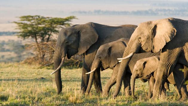 为什么大象、犰狳、豚鼠等动物很