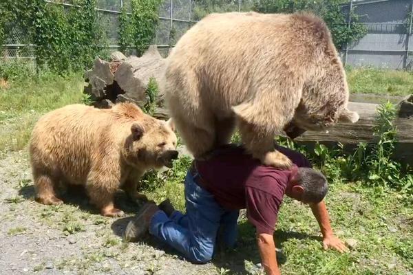 美国饲养员背起360斤顽皮熊 大玩平衡游戏