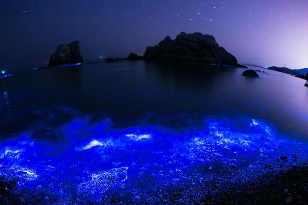 """大连海域频现""""荧光海""""美若仙境 走在沙滩如漫步星空"""