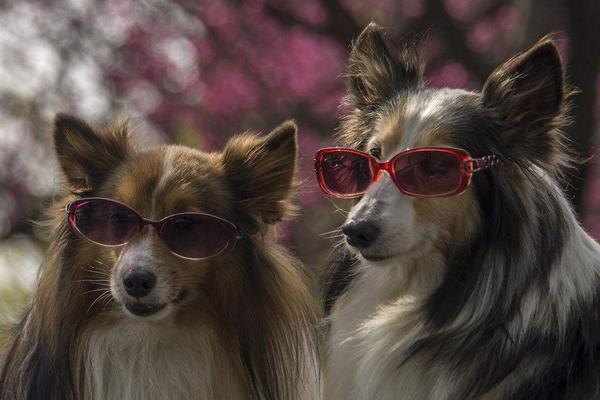 """第一款给狗狗用的""""手机"""" 还是智能的"""