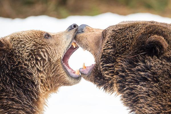 解锁动物打架迷之姿势 这么热的天请消停一下!