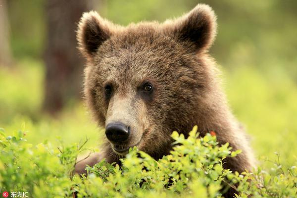 """芬兰男子散步遇""""佛系""""野熊 面对面拍照毫不设防"""