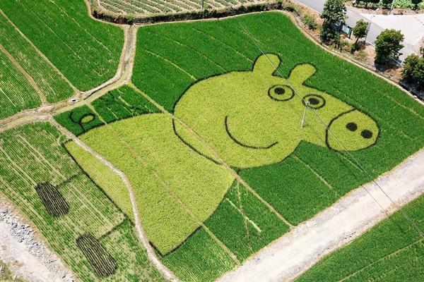 """掌声送给农民大哥 稻田里种出""""小猪佩奇"""""""