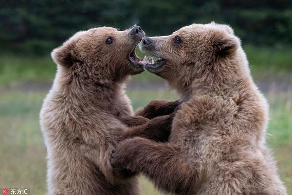 """一""""抱""""泯恩仇!阿拉斯加两灰熊打架后上演爱的抱抱"""