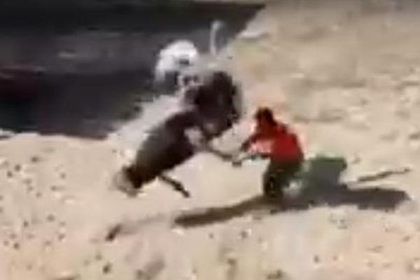 俄动物管理员欲喂食鸵鸟却遭其连续暴踢