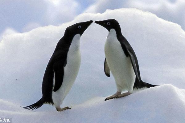 七夕动物亲吻照爱意满满 爱Ta你就亲亲Ta!