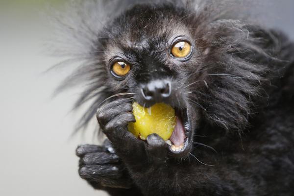 德动物园获赠300公斤李子 小动物大快朵颐吃相毕露