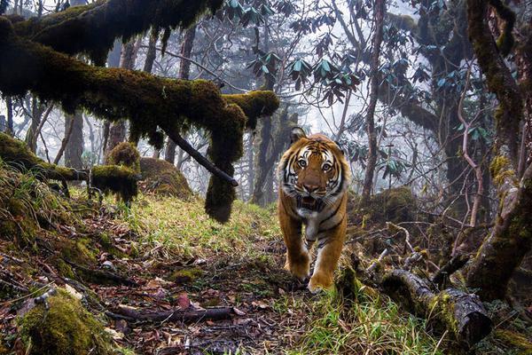 英野生动物摄影师大赛作品展出 精彩画面令人惊叹