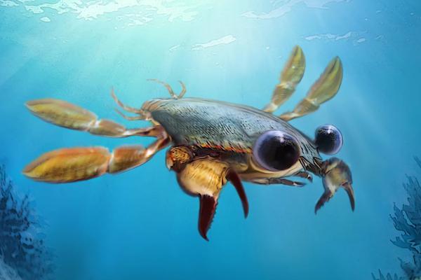 远古螃蟹外形怪异:长着巨婴眼睛超级可爱